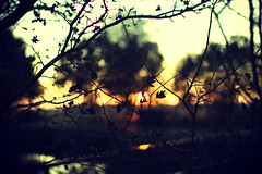 Twilight (Gryphes) Tags: trees brown sun plant leaves 35mm canon eos twilight dof bokeh 14 rail outoffocus manual 500 manualfocus samyang35mmf14
