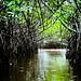 Mangroves-8