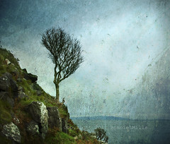 At the Edge  [Explore] (RonnieLMills) Tags: ireland tree art bay coast nikon gallery contemporary north fine explore edge ie northern society agora textured antrim the ourtime murlough d90 mullofkintyre theworldwelivein rockpaper alberoefoglia memoriesbook naturespoetry tatot artistictreasurechest redmatrix magicunicornverybest