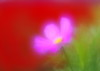 Cosmos (h orihashi) Tags: flower macro japan pentax 日本 softfocus 花 k5 bej ソフト impressedbeauty diamondclassphotographer flickrdiamond citrit cherryontopphotography pentaxk5