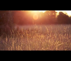 (martinfowlie) Tags: autumn sunset sun tree grass golden evening girton