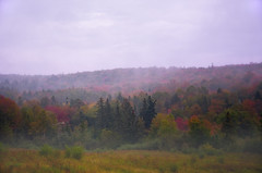 a foggy fall morning near maitland (Brian D. Tucker) Tags: autumn trees fall fog novascotia maitland blueribbonwinner d7000