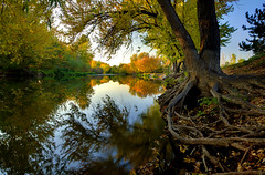 Boise River Autumn