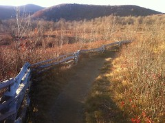 Graveyard Fields Trail - Fence