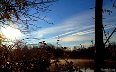Flying South (PhotonPirate) Tags: sky mist reflection sunrise geese pond migration vformation sapsuckerwoods
