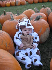 Horse in the pumpkin patch
