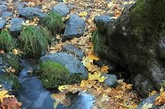 DSC_6553 (shortlens) Tags: fall autumnleaves granite yosemitenationalpark yosemitevalley mercedriver