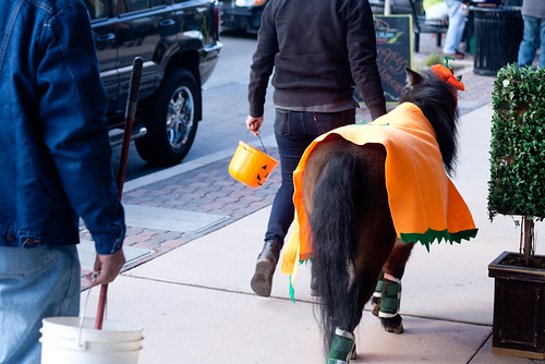 pumpkin pony (1 of 1)
