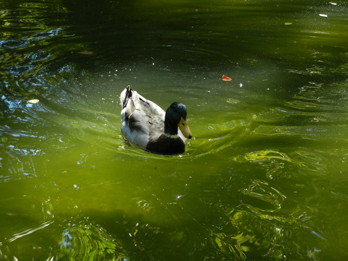 Lithia Park, Ashland, Oregon _ 6120