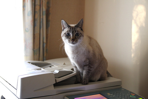 パンチラpart5 [無断転載禁止]©bbspink.com->画像>3408枚