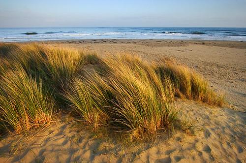 Anglesea, Victoria, Australia IMG_3178_Anglesea