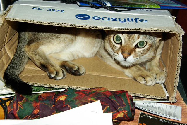 Flash in the Box 1