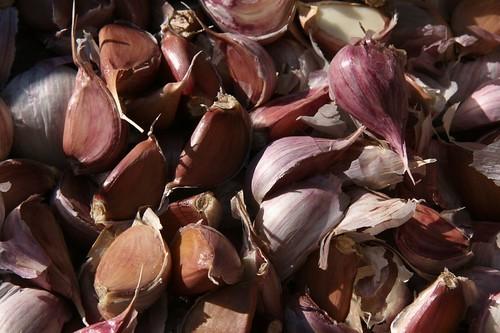 garlic seed