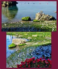 Díptico-por el puerto (alma-81) Tags: puerto gaviotas cudillero mareabaja