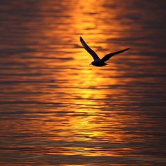 Fly into the Sunset #1 (kobaken++) Tags: sunset sky lake reflection nature water japan canon lens eos mirror fly 5d    kasumigaura ibaraki  mark2     kobaken namegata