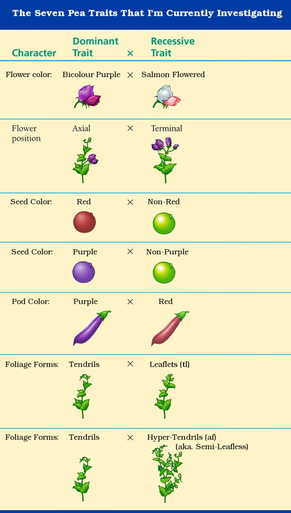 My Seven Pea Traits