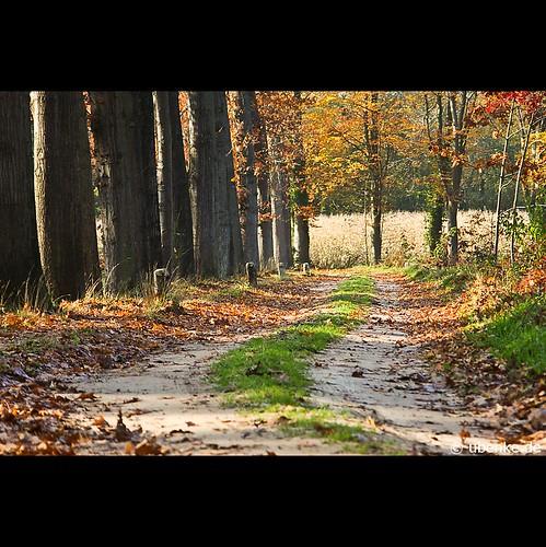 _take_a_walk