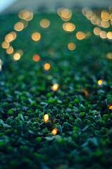 'City lights' (thisisforlovers) Tags: art grass photography 50mm lights luces nikon bokeh desenfoque nikkor f18 18 hierba thisisforlovers d7000 andreadorantes
