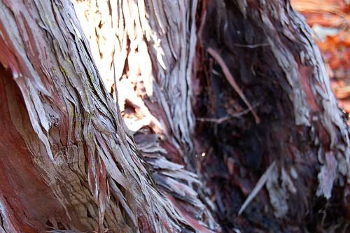 TreeBarkE