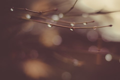 it's raining - 38/365 (after october) Tags: rain branches dreary raindrops blah raining pouring day38 project365 herestoabetterdaytomorrow iknowthingscouldbealotworse andimgladtheyarent justayuckysortofday