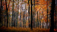 Late Autumn in the woods (algo) Tags: uk autumn england bali fall indonesia interestingness topf50 topv555 fallcolors chilterns topv222 autumncolours explore algo topf100 frontpage 100f wendoverwoods 50f bej explore37 thechilternhills 111119