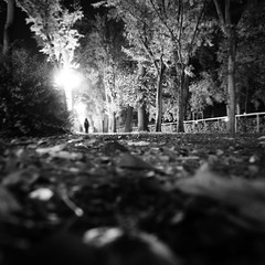 In all the wrong places (Arianna_M(busy)) Tags: autumn trees leaves foglie alberi night florence darkness walk firenze autunno cascine longwalk viale parcodellecascine ijustlovethisplace imadreamer somethingleftbehind walkingthroughthedarkness somethingotherthanremaining theworldweknewaschildren alliknowistonight