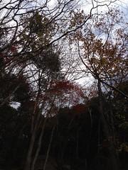 ちょっと紅葉の写真