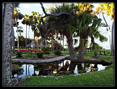 The First Pond (Chris C. Crowley) Tags: park flowers reflection water pond scenic palmtrees ormondbeachflorida chriscrowley celticsong22 aimespark thefirstpond