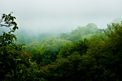 Breathing (Nicolas Pavlidis) Tags: wood green fog landscape nebel hill hellas greece grn griechenland wald bume hgel ttrees