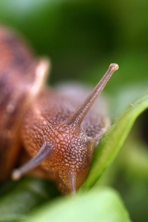 070111_snail