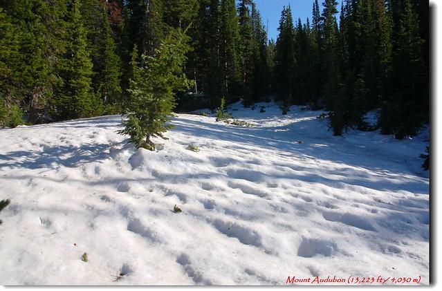 森林內積雪覆蓋登山步道