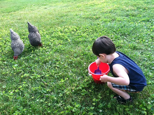 [186/365] Feeding the Chickens by goaliej54