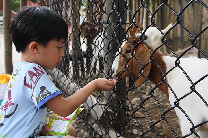 六福村動物園068