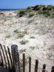 Dune sur la plage entre Canet et Saint-Cyprien (bleumarie) Tags: mer soleil couleurs dune sable plage vgtation pyrnesorientales barrire piquet thuir ganivelles bleumarie mariebousquet photomariebousquet