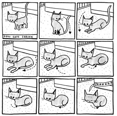 How Cats Shrink