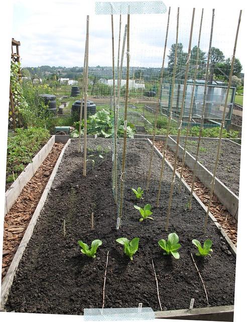 Garden During
