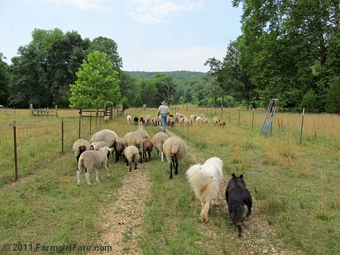 Heading out to the front field after working the sheep 1 - FarmgirlFare.com
