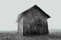 _23_00032_qurstu Tiltshift b&w - Switzerland, Gruyère Region - Old hayloft. Cabanon-fenil des Mollenchires, alt. 905m. (Valentin Vuichard) Tags: blackwhite noir fribourg valentin blanc foin argentique gruyere noirblanc grenier gruyère hayloft fenil vuadens haylofts vuichard valentinvuichard mollenchires grenieràfoins