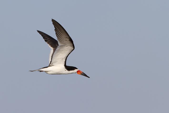 071411_bird06