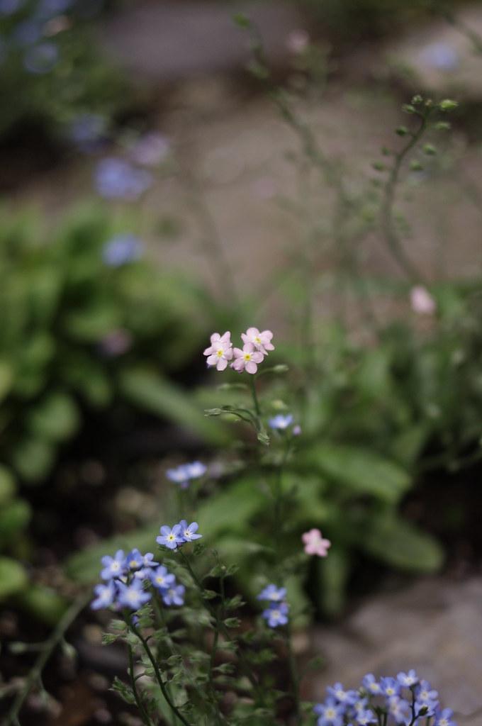 【請問】有人知道這花叫啥名字?