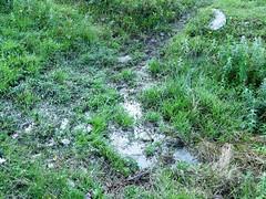 Chemin boueux - Bellachat 005