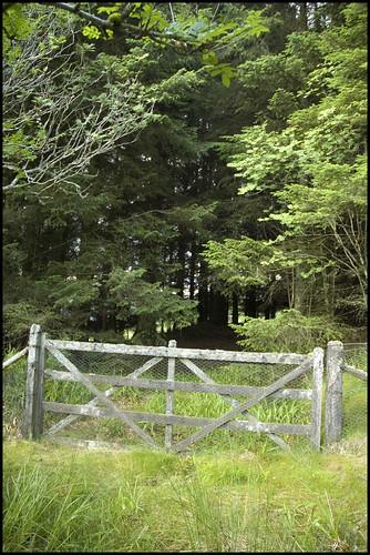 Glen of Cushnie II