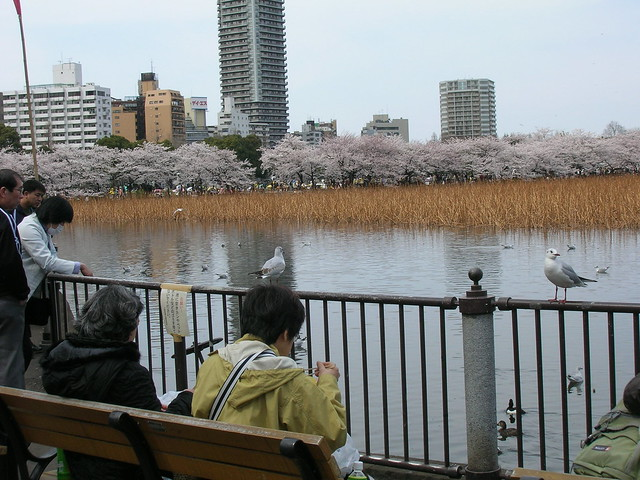 d7-17-ueno-park