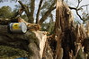 Heitern3127 (hamschtr) Tags: bäume sturmschaden zofingen heitere heitern heiternplatz