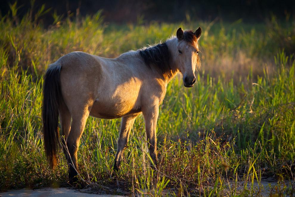 Un caballo mestizo busca pastizales a orillas de una paradisíaca playa escondida a orillas del Río Jejuí en Puerto La Niña. (Tetsu Espósito)