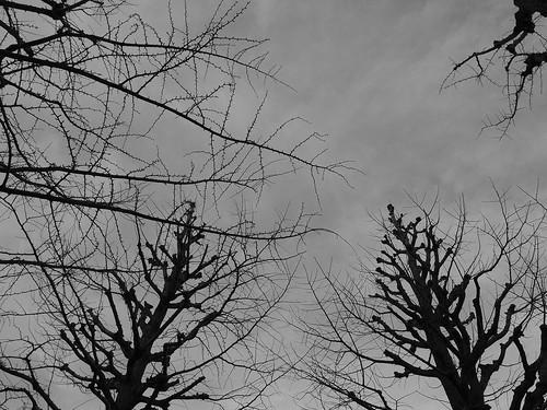 田園調布 夕暮れの枯れ木