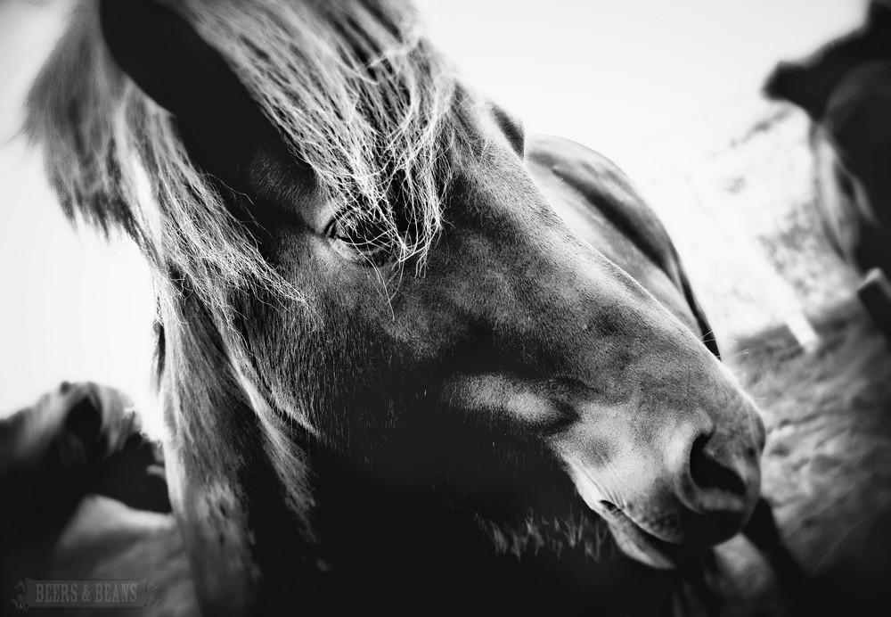 vintage horse smallerforBnB
