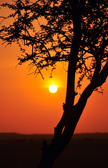 sunset (Shrf AlMalki..) Tags: sunset orange sun tree nature silhouette nikon lonely     shrf   almalki