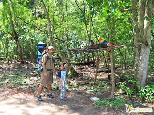 Mayan Ruins Macaws Copan Honduras
