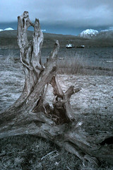 IMG_9498_c_C (srchaput) Tags: trees ir infrared